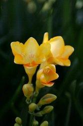 庭の花 603.jpg