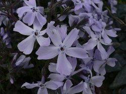 庭の花 673.jpg