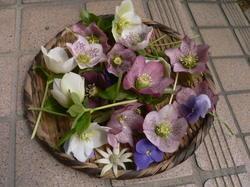 庭の花 688.jpg