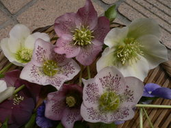 庭の花 691.jpg