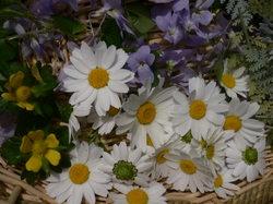 庭の花 693.jpg