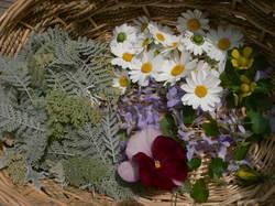庭の花 696.jpg