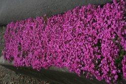 庭の花 716.jpg