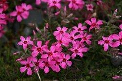 庭の花 741.jpg