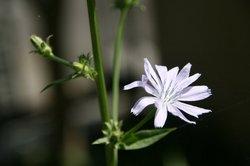 庭の花(押し花) 012.jpg