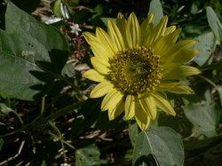 庭の花(押し花) 094.jpg