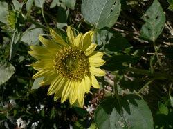 庭の花(押し花) 104.jpg