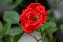 庭の花6月 036.jpg
