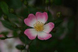 庭の花6月 047.jpg