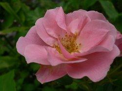 庭の花6月 118.jpg