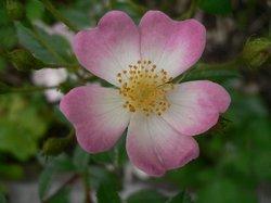 庭の花6月 119.jpg