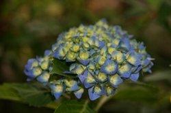 庭の花6月 178.jpg