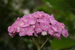 庭の花6月 181.jpg