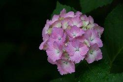 庭の花6月 184.jpg