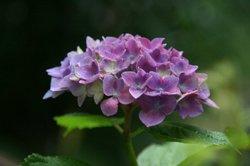 庭の花6月 185.jpg