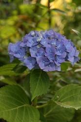 庭菜園6月 122.jpg