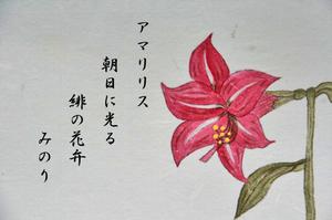 はがき 花-072.jpg