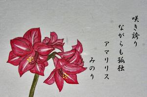 はがき 花-081~~.jpg