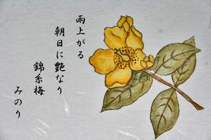 はがき 花-087~~.jpg