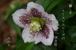ギザギザ〜2.JPG