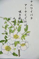 ナニワイバラ-004.jpg