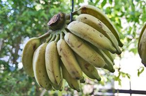 バナナ-064.jpg