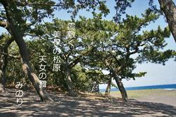 三保 松原 俳句.jpg
