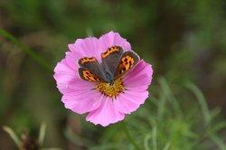 大きめの蝶.jpg
