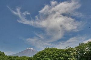 富士と薔薇-053.jpg
