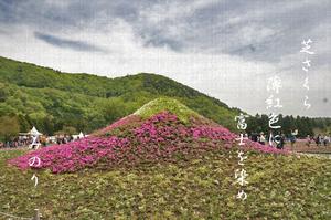富士山芝さくら-051~.jpg