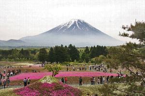富士山芝さくら-070~~.jpg