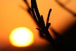 幻想的な夕日.jpg