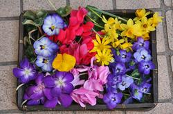 押し花.jpg