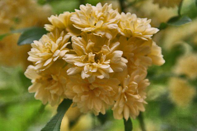 春の花-030~~.jpg