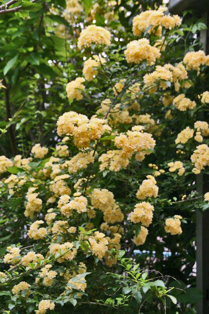 春の花-053~.jpg