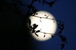 木陰とお月様.jpg