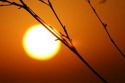 枯れ木と夕日.jpg