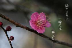 梅の花〜〜3.JPG