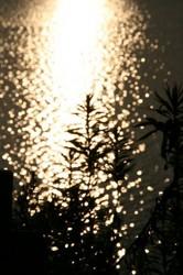 水辺の輝き.jpg