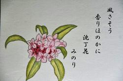 沈丁花-006~~.jpg