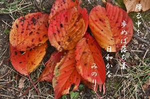 紅葉-073~~.jpg
