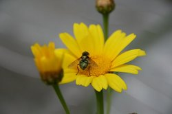 花と虫.jpg