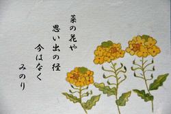 菜の花 クロッカス-015.jpg
