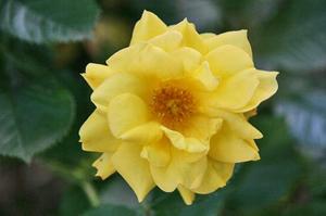 薔薇-088.jpg
