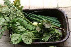 虫食い野菜.jpg
