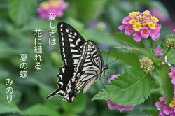 蝶〜♪.jpg