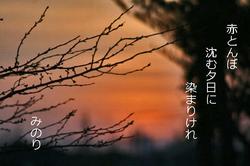 赤とんぼ 俳句.jpg