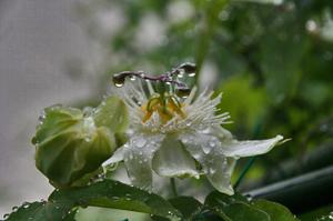 雨の雫-077.jpg