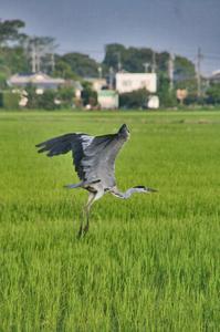 鳥 035-(1).jpg