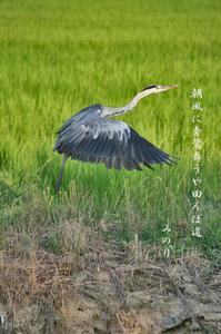 鳥 035-(2).jpg